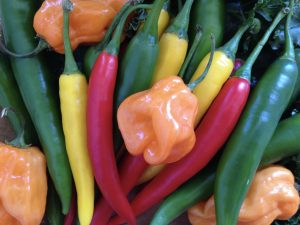 Photo of chili peppers means my designs are hot!